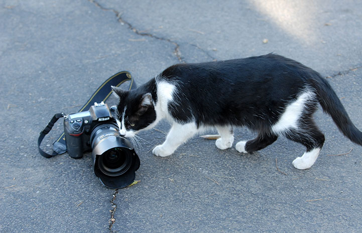 Community cat checking out a camera