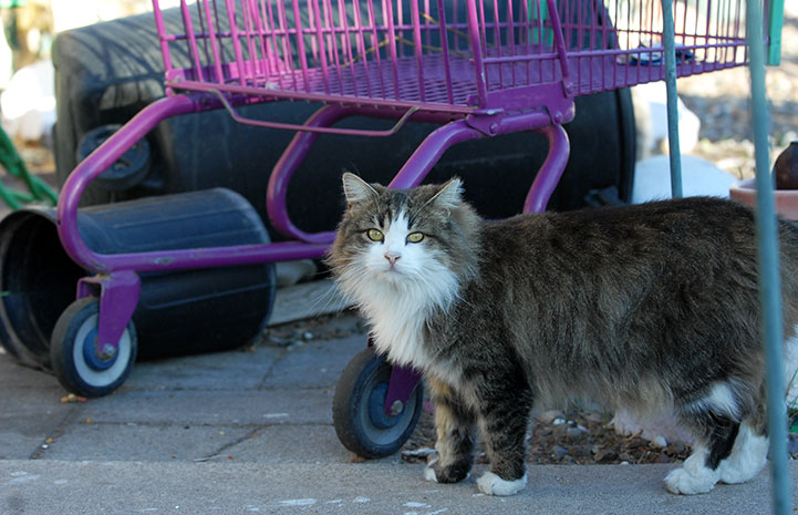 Community cat in front of a shopping cart