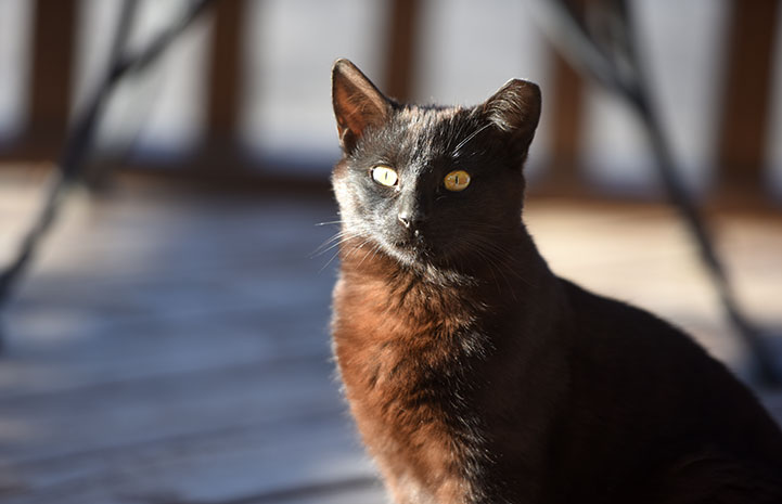 Black community cat in the sun