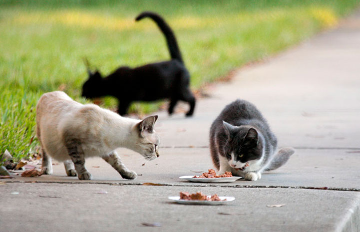 Community cats being fed