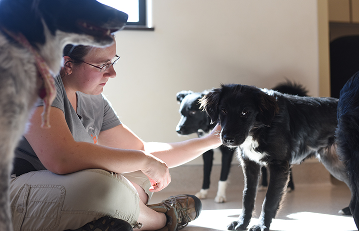 Elizabeth helping the border collie mix puppies in puppy socialization class