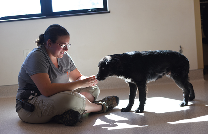 The border collie mix pups are getting the very best chance to succeed