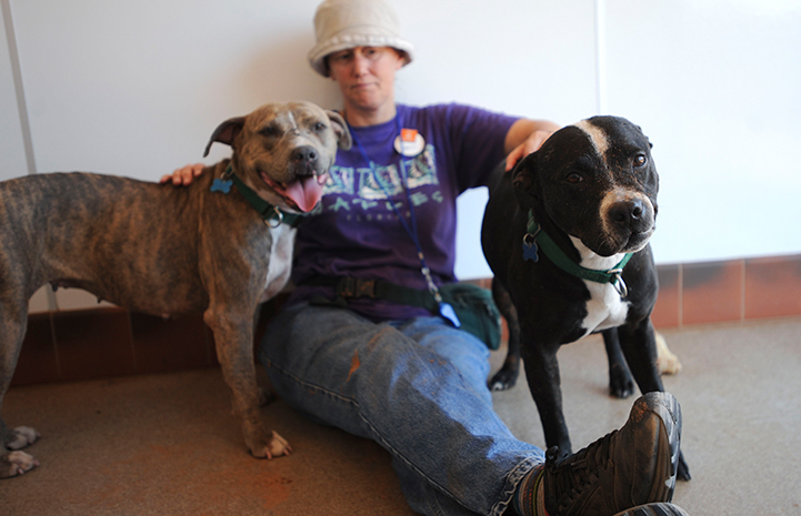 Jerri with Liberty and Flower, two pitbull dogs