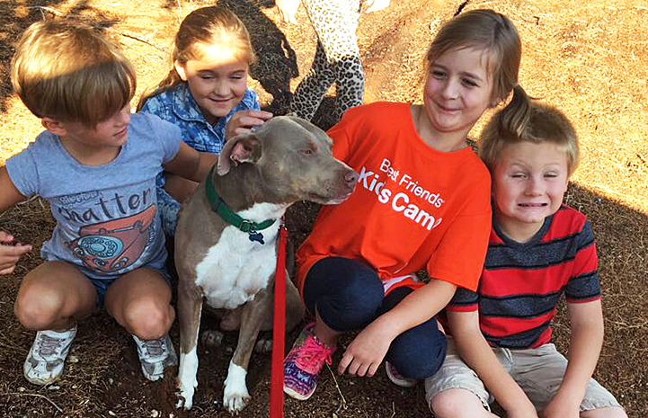 Sting the pitbull was a canine ambassador at Kids Camp