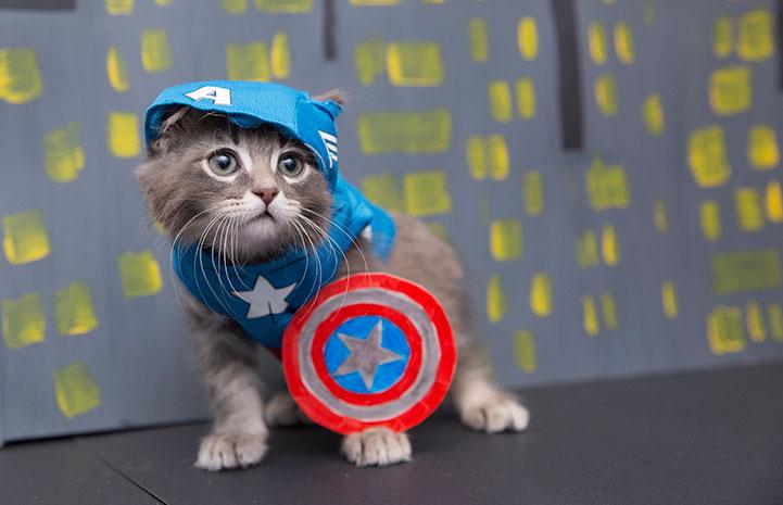 Kitten dressed up as Captain America