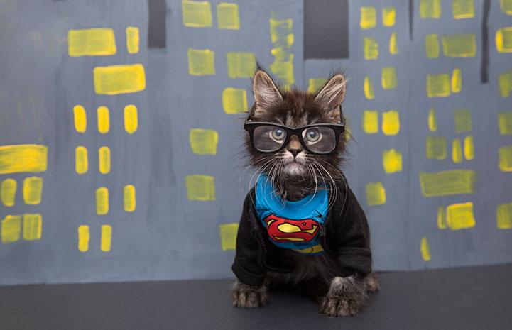 Kitten dressed up as Clark Kent