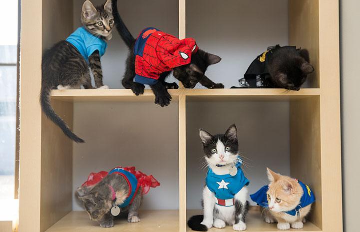 Kitten dressed up as superheros