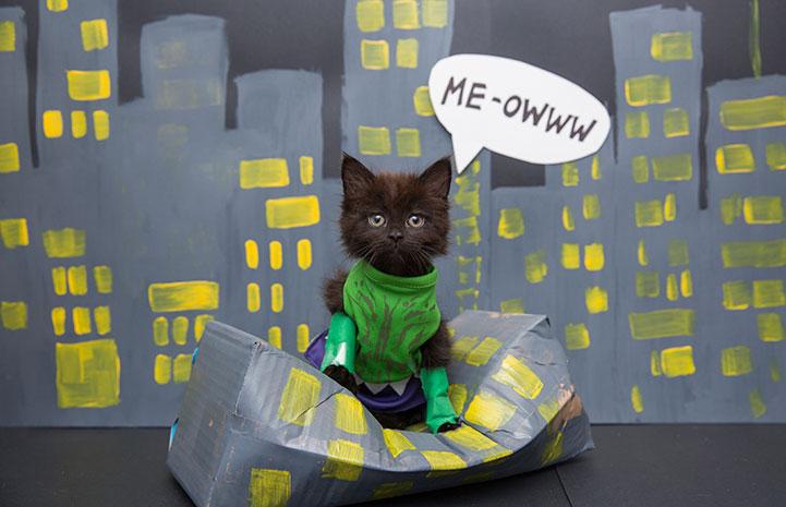 Kitten dressed up as the Hulk