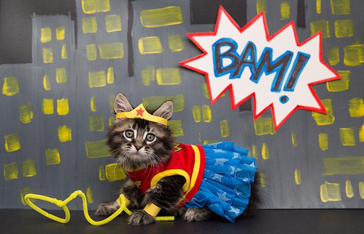 Kitten dressed up as Wonder Woman
