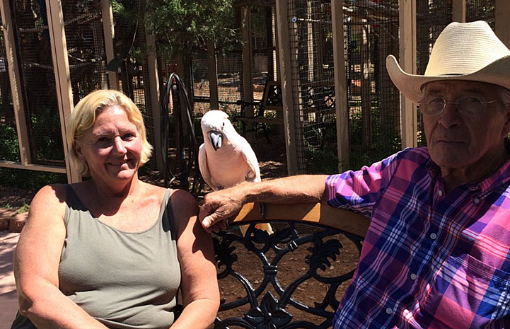 Seppi the legendary Moluccan cockatoo and his new family