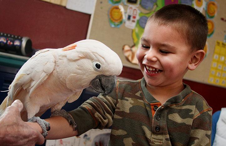 Seppi the Moluccan cockatoo with a preschooler