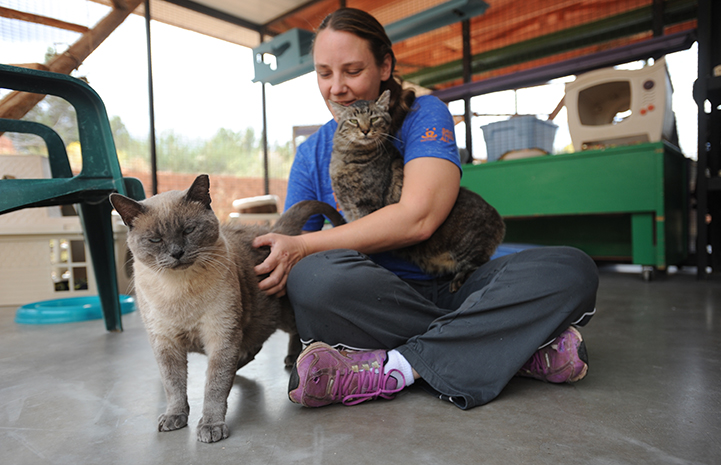 Skittles and another cat named Major with caregiver Kristen