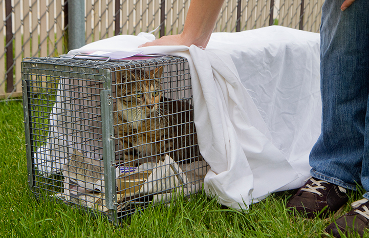 Community stray cat in humane trap