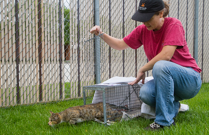 Community cat being released from a humane trap