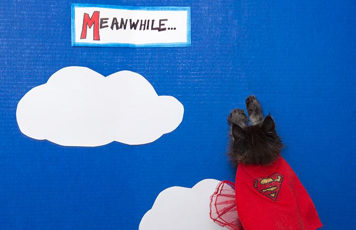 Kitten dressed up as Superman