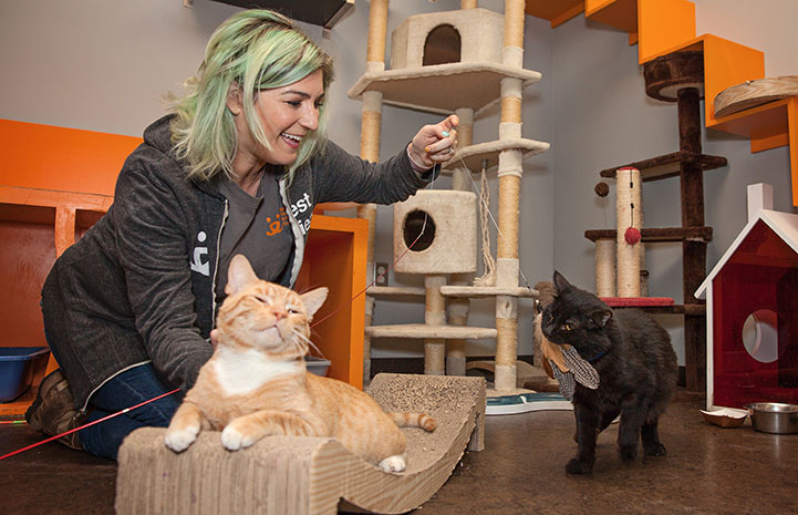 Samantha Bell DiGenova playing with some cats