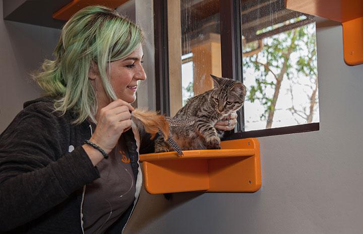 Samantha Bell DiGenova playing with a kitten