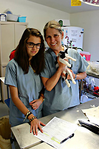 Dr. Paige Brainard helped spay and neuter community cats in Tucson, Arizona