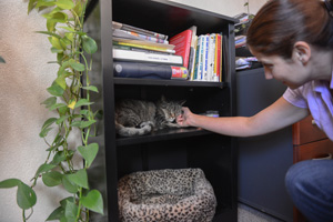 Lola the shy tabby cat is now much more affectionate