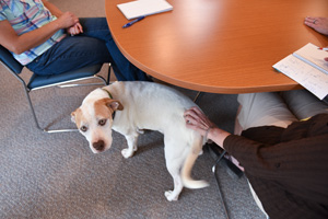 Shug the often overly excited dog enjoying some one-on-one attention in an office from the staff
