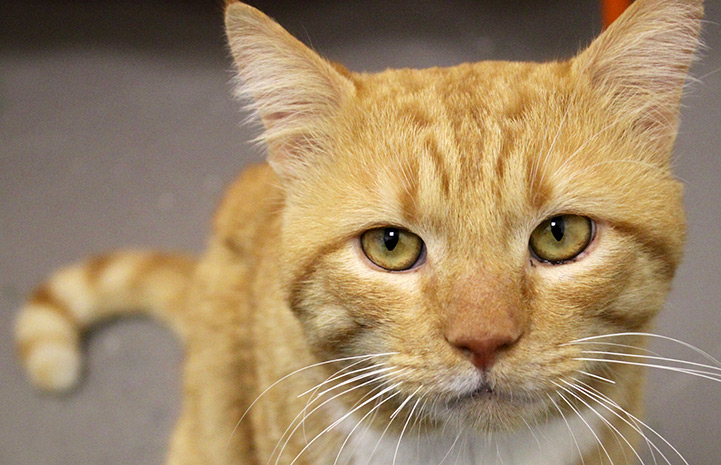 Horatio was just waiting for the right person to adopt him