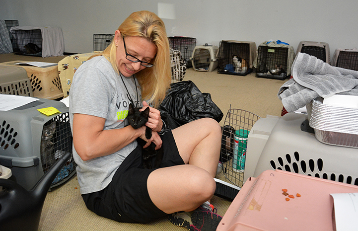 Volunteers at Austin Pets Alive care for cats pulled from Houston shelters