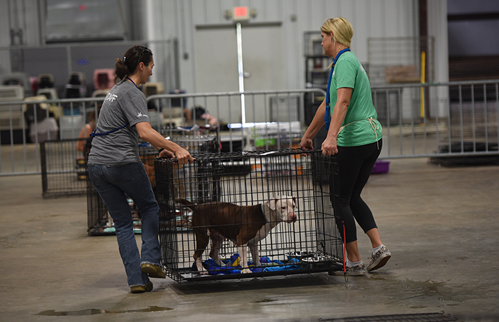 Staff and volunteers set up the Rescue and Reunite Center, as animals begin to arrive