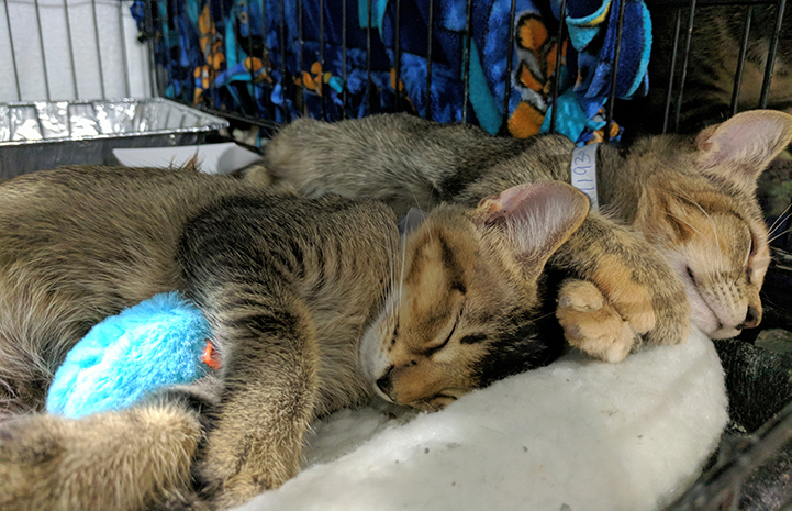 These cats know they're safe and sound at the Rescue and Reunite Center