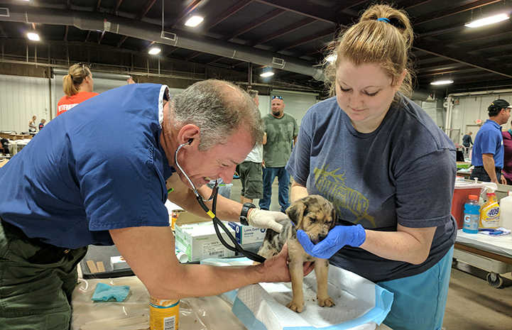 Volunteer vet Dr. J and vet tech Kendra check out a young puppy at the Rescue and Reunite Center