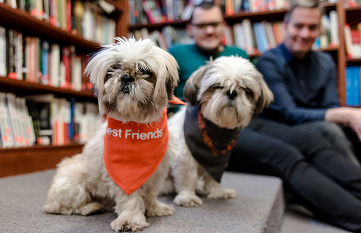 Adopting two senior shih tzus is the best decision these New Yorkers have ever made