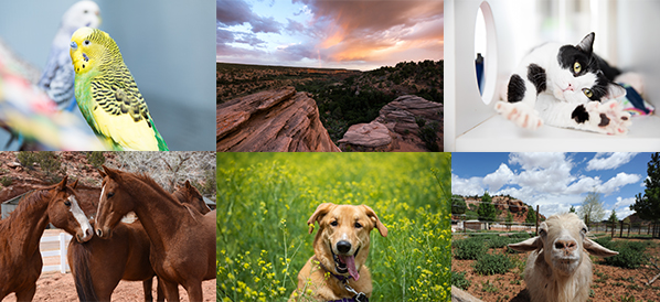 Collage of images of animals from Best Friends Animal Sanctuary