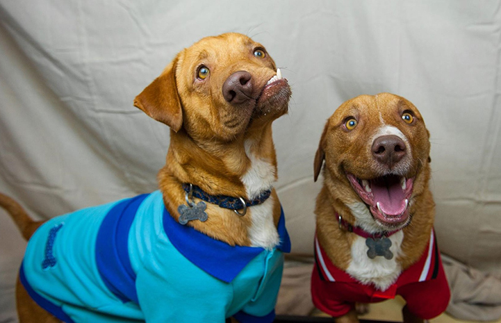 Picasso and Pablo the dogs are brothers and one has a smile like no other