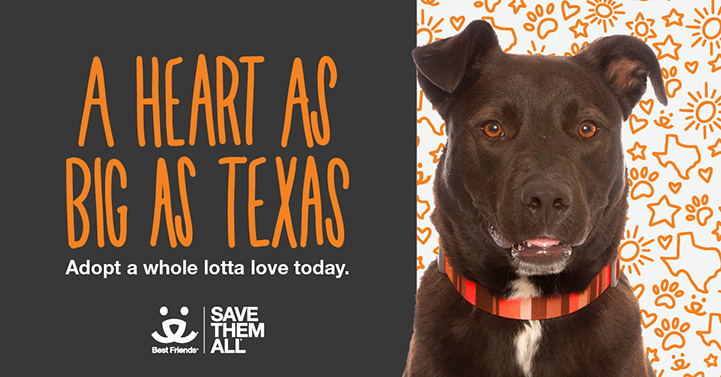 A heart as big as Texas big dog adoption promotion featuring a brown dog