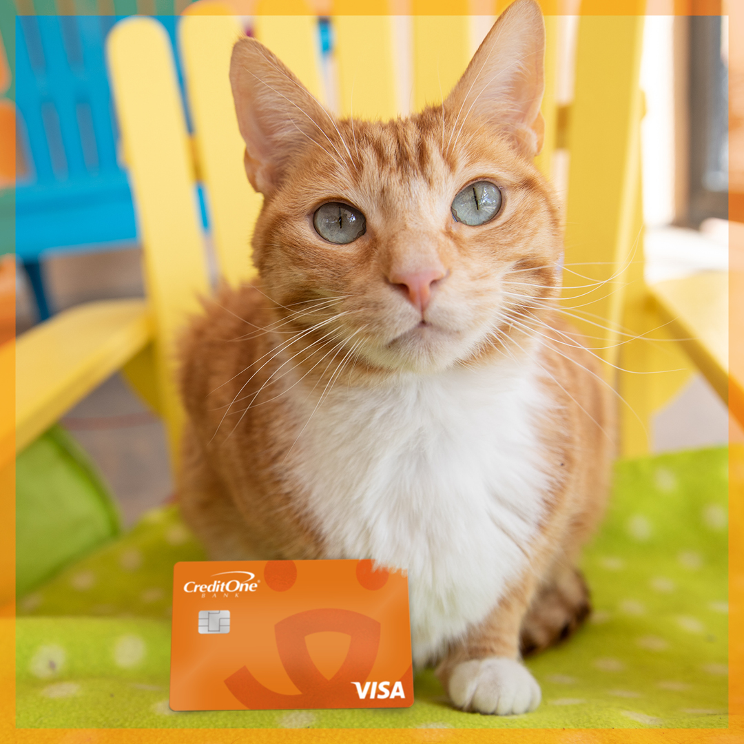 Orange tabby and white cat on a yellow chair with the Best Friends credit card