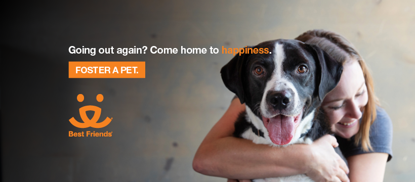 Smiling person hugging a dog with words, Going out again? Come home to happiness Foster a pet