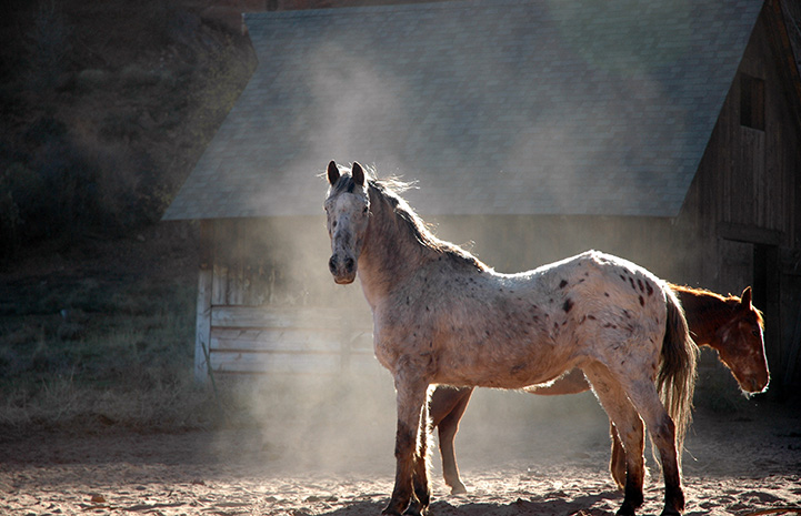 Dee the horse in a dust cloud
