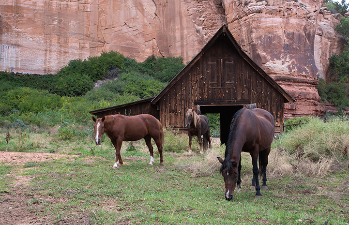 Horses standing in front of the barn from the One Little Indian film
