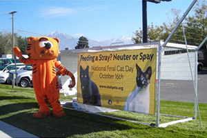 Holly Sizemore dressed up as Heathcliff the cat to encourage trap-neuter-return (TNR)