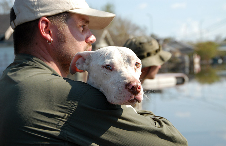 Man holding a white pit-bull-type dog who was rescued after Hurricane Katrina