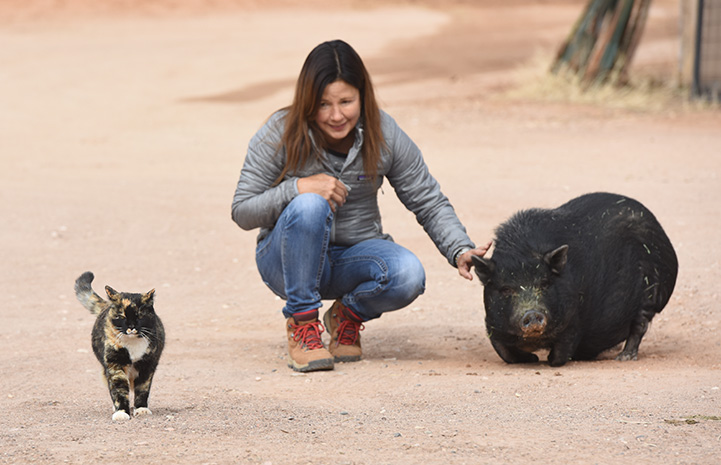 Meow the community cat by a woman petting a pig