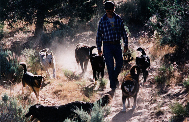 Tyson walking a pack of dogs