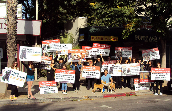 Peaceful protest of a pet store that sells puppies