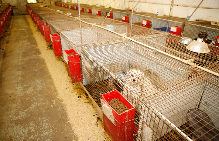 Rows of cages in a puppy mill