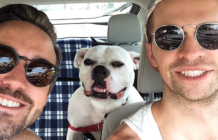 Mrs. Mary Todd Lincoln the dog's adoption story from Best Friends in New York is pure happiness