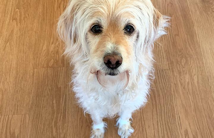 Tucker the dog