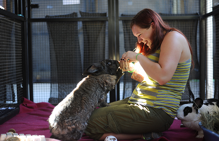 Here are 10 facts about pet bunnies to help you get started on your journey to adopt a rabbit