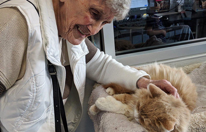 Older woman smiling and leaning down to pet the cream and white cat she's adopting