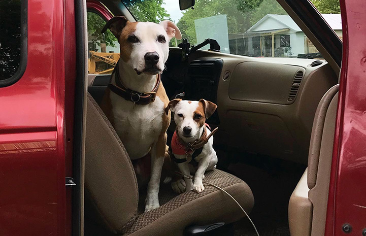 Stretch and Peanut the dogs next to each other in the passenger side of a vehicle