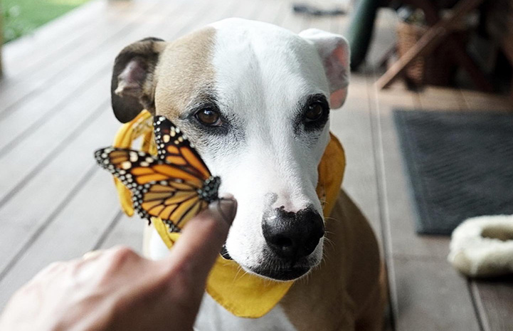 Stretch the dog with a butterfly on a person's finger