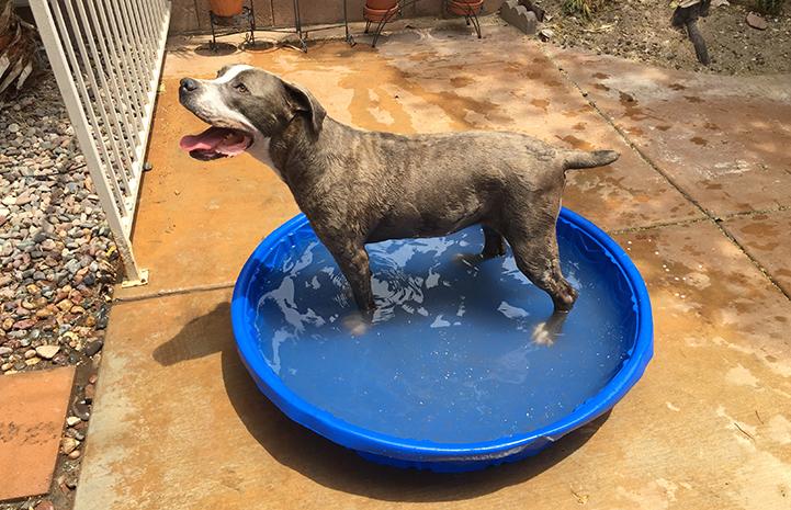 Daphne enjoys a fun dip in the doggy pool
